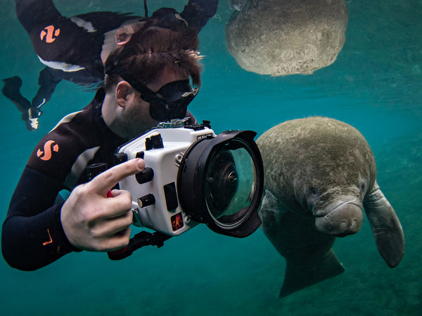 Planning a Trip to Photograph Manatees in Crystal River, Florida