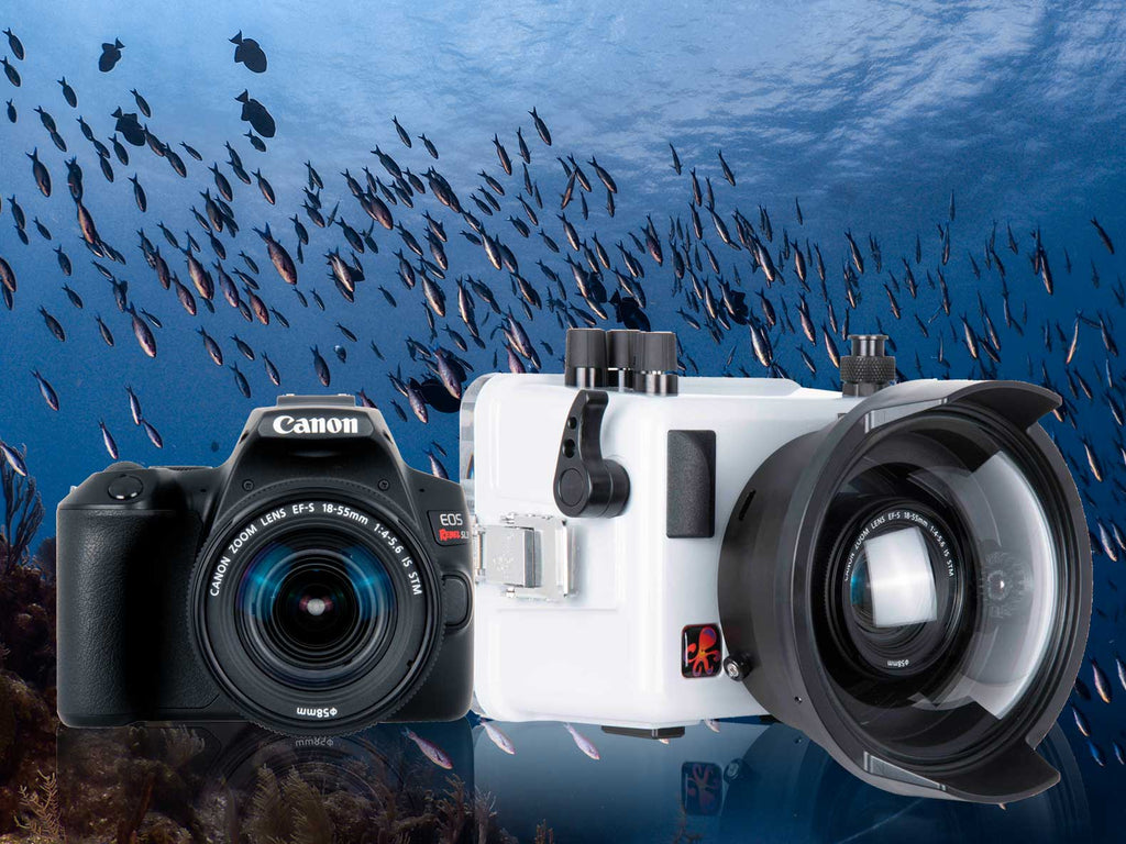 First Look Canon EOS Rebel SL3 250D Underwater Housing