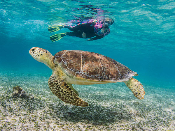Just Below the Surface | Shooting on Snorkel in Grand Cayman