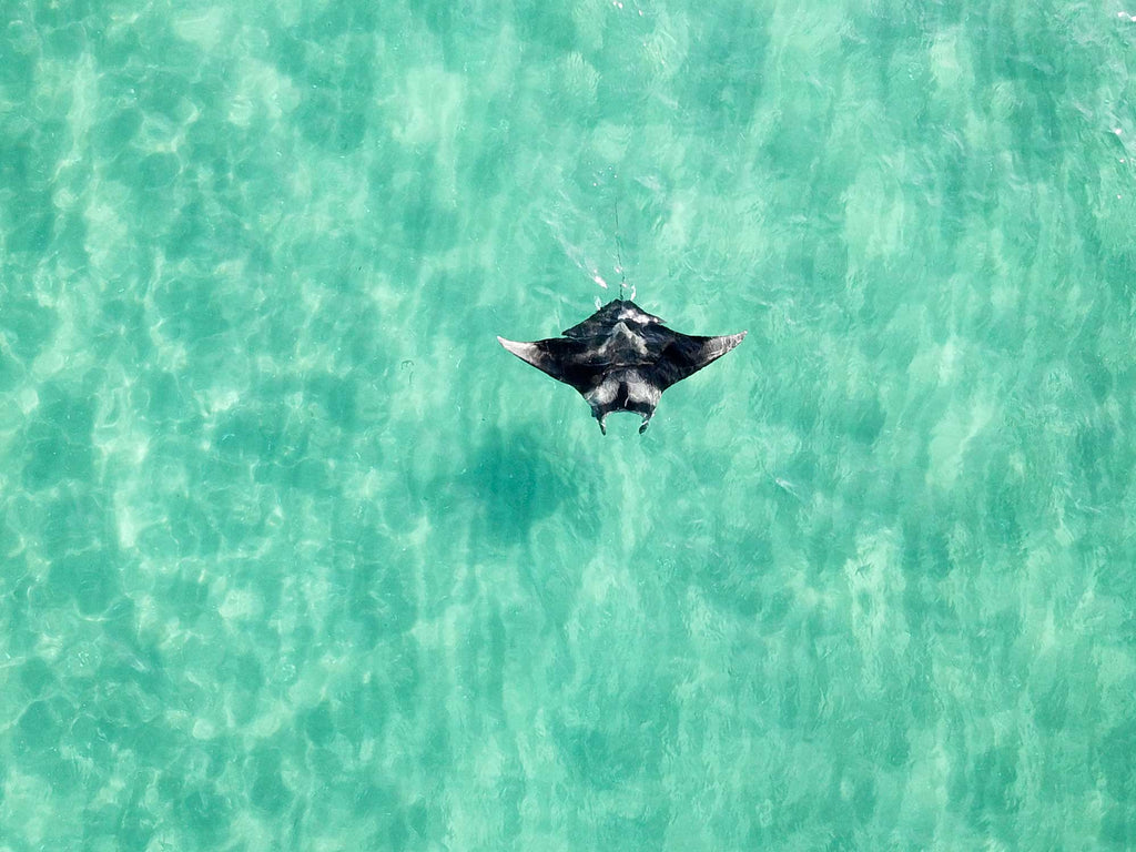 Uncovering the Unexpected with the Florida Manta Project