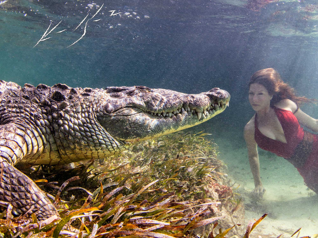 Crocodiles, Cenotes, and Chinchorro with Ken and Kimber Kiefer