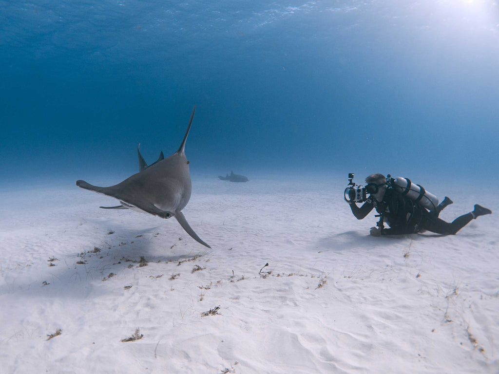 6 Ways You and Your Kids Can Help Save the Sharks