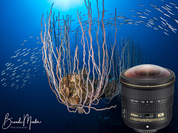 Nikon 8-15mm Fisheye Compact 8 inch Dome Underwater Photos