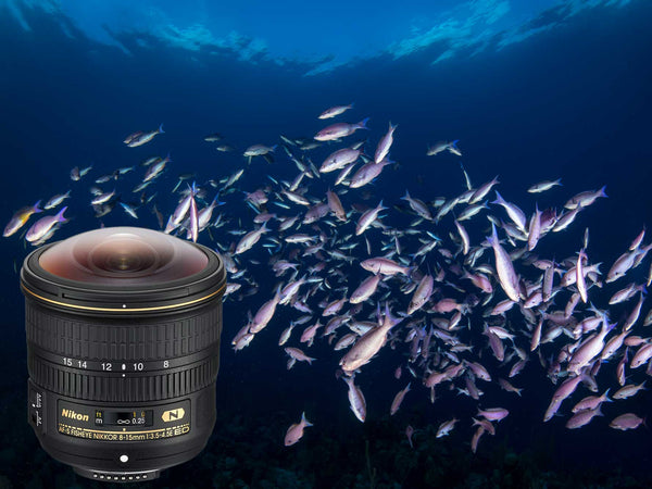 Nikon 8-15mm Fisheye Lens Underwater Photography Review