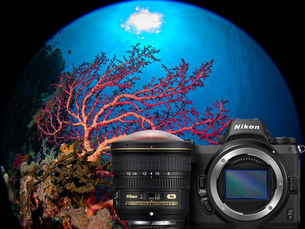Nikon Z7 and 8-15mm Fisheye Underwater Photos with Compact 8 inch Dome