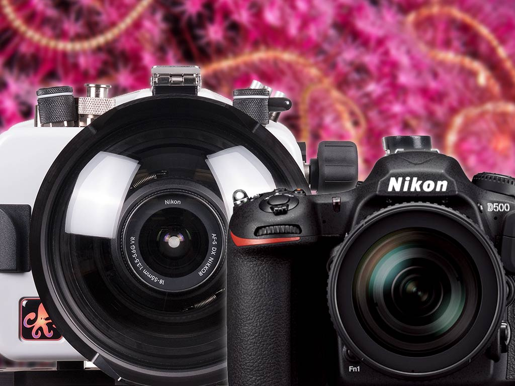 First Look at the Nikon D500 DSLR Camera and Housing