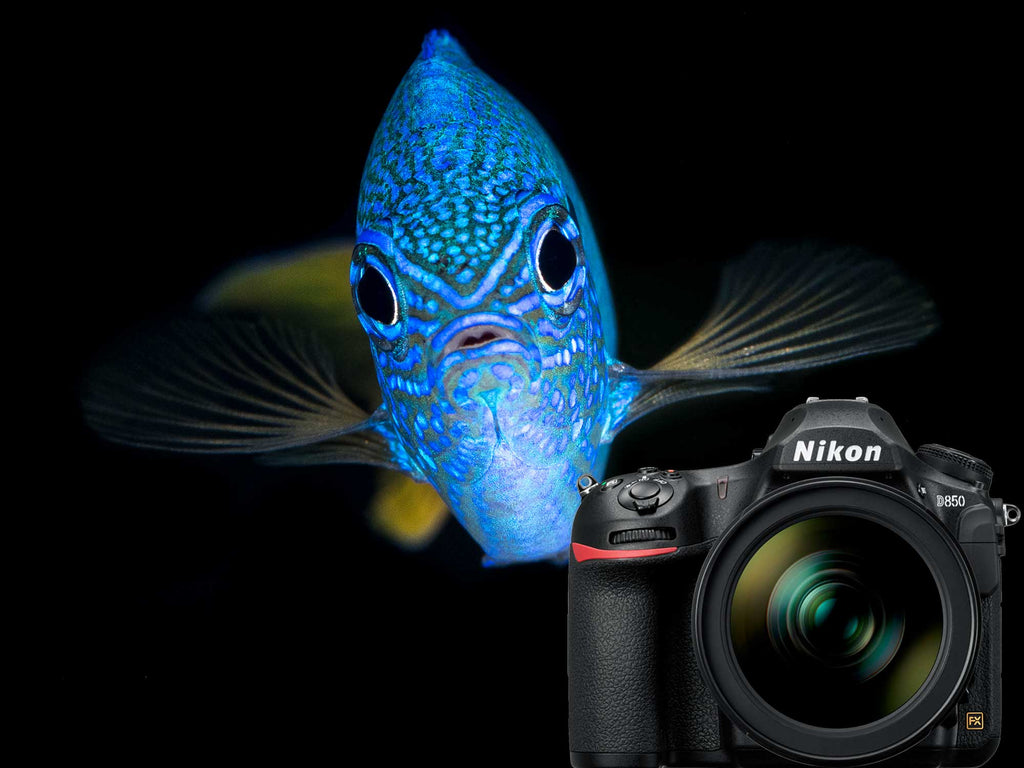 Nikon D850 Underwater Photos Ikelite