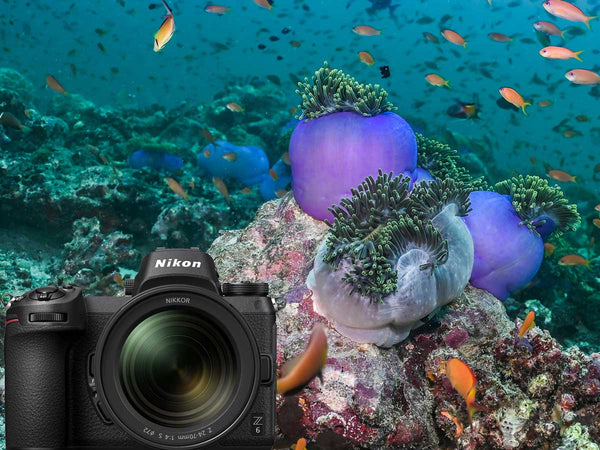 Nikon Z6 Full Frame Mirrorless Underwater Photos