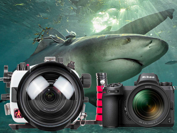 In the Water with the Nikon Z6 Full Frame Mirrorless Camera
