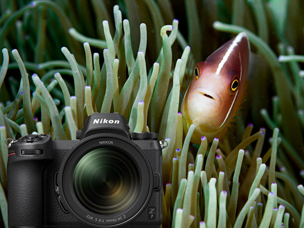 Nikon Z7 Full Frame Mirrorless Underwater Photos