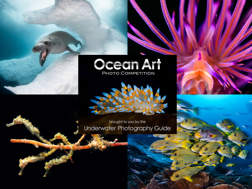 Competition | Ocean Art Safe Under the Sea 2019