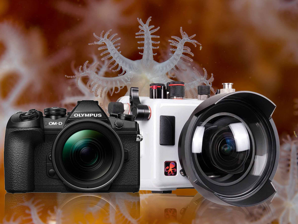 Olympus OM-D E-M1 Mark II Underwater Housing & Camera Review