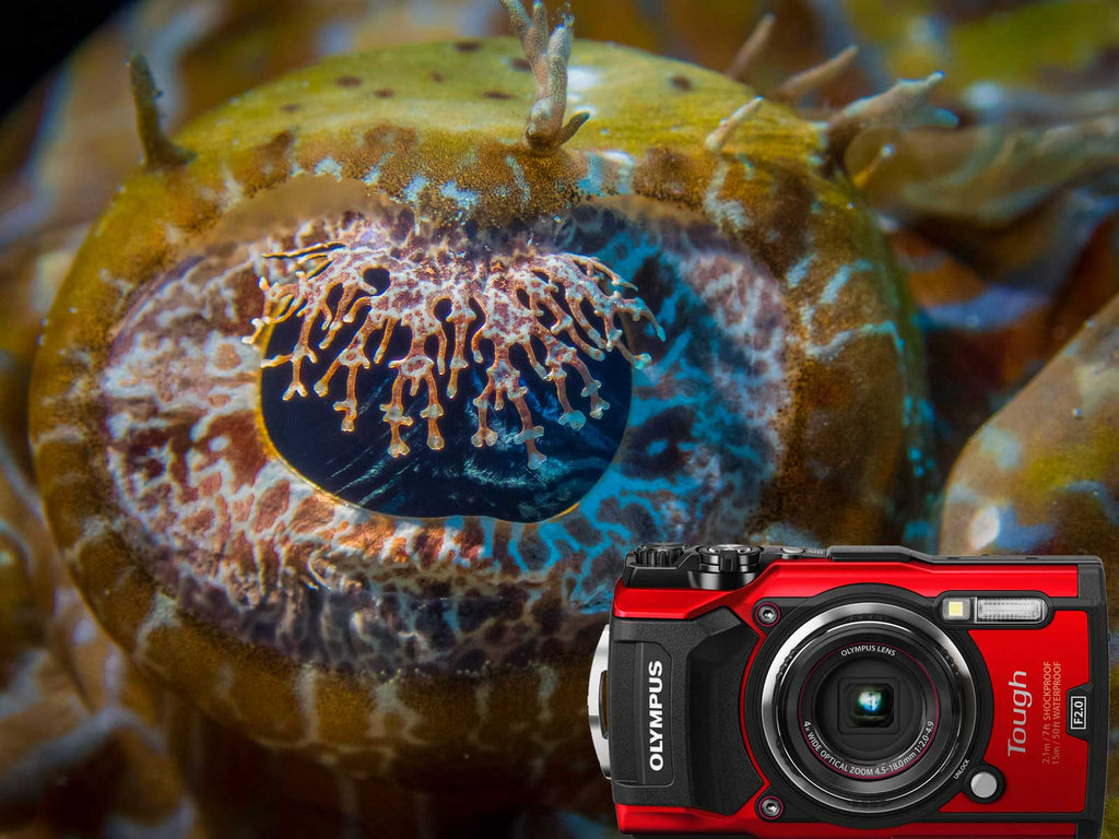 Olympus Tough TG-5 Underwater Photos