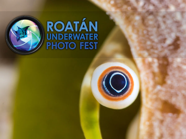 2018 Roatán Underwater Photo Fest Trip Report
