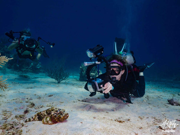 2019 Roatán Underwater Photo Fest Trip Report