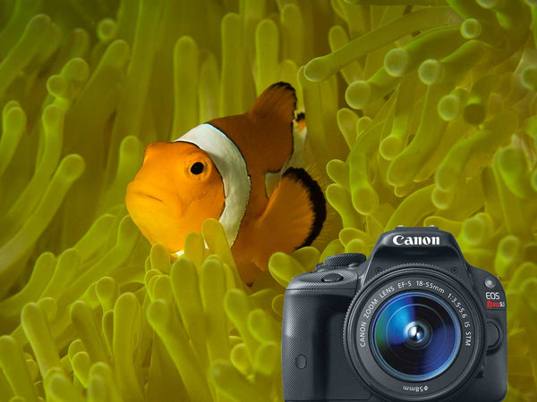 Canon EOS 100D Rebel SL1 Underwater Photos