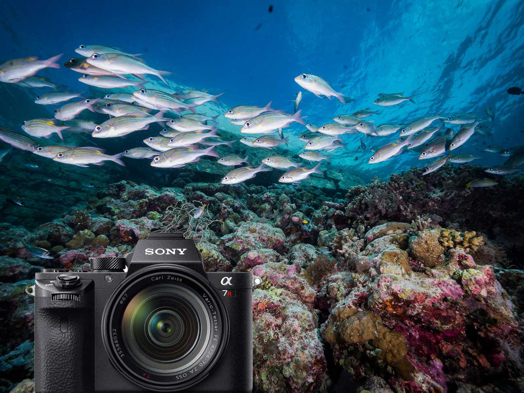 Sony Alpha A7R III Underwater Photos – Ikelite