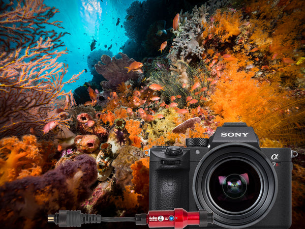 DL2 DS Link Sony TTL Converter Underwater Photos