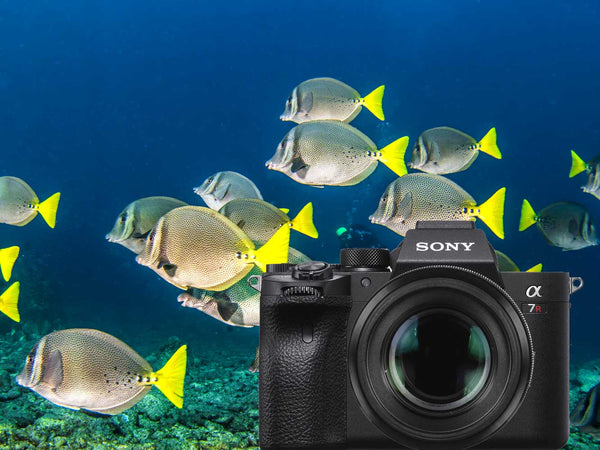 Sony Alpha a7R IV Underwater Photos