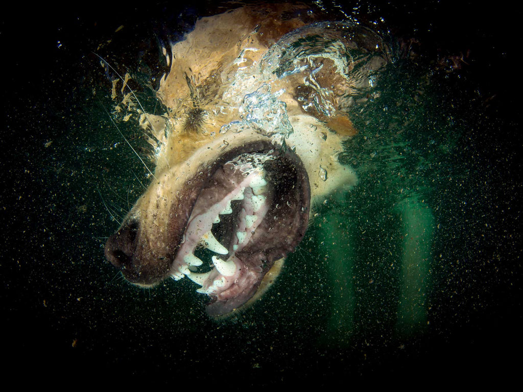 How to Photograph Dogs Underwater