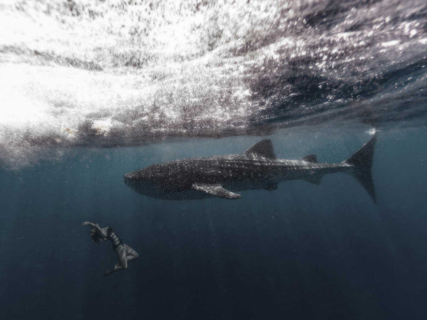 Top Tips for an Awesome Whale Shark Encounter