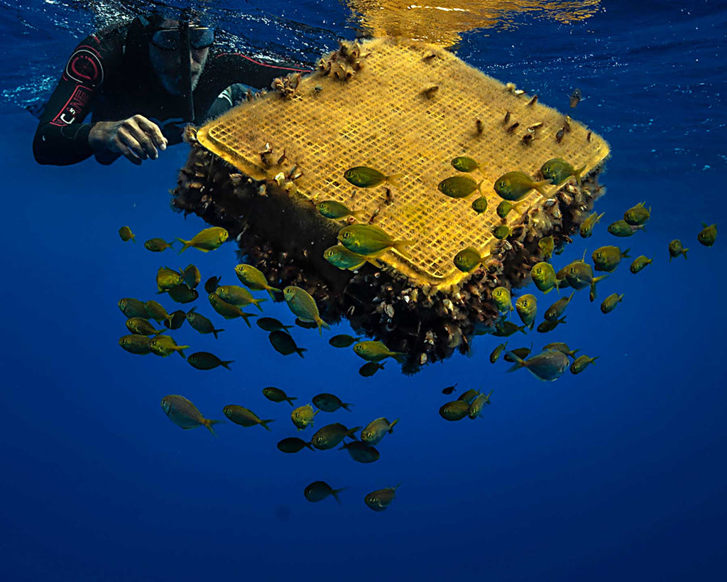 Plastic container turned artificial reef in Pacific Ocean Copyright Adam Hill