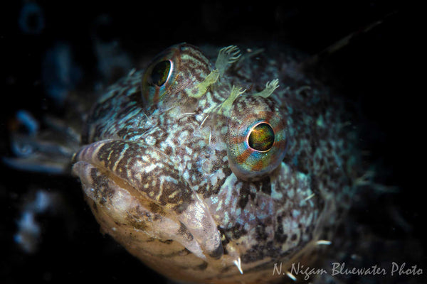 Underwater Photo Canon EOS R6 Ikelite Housing Nirupam Nigam