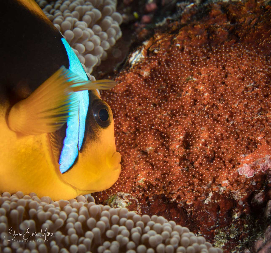 Canon Rebel SL2 Underwater by Steve Miller