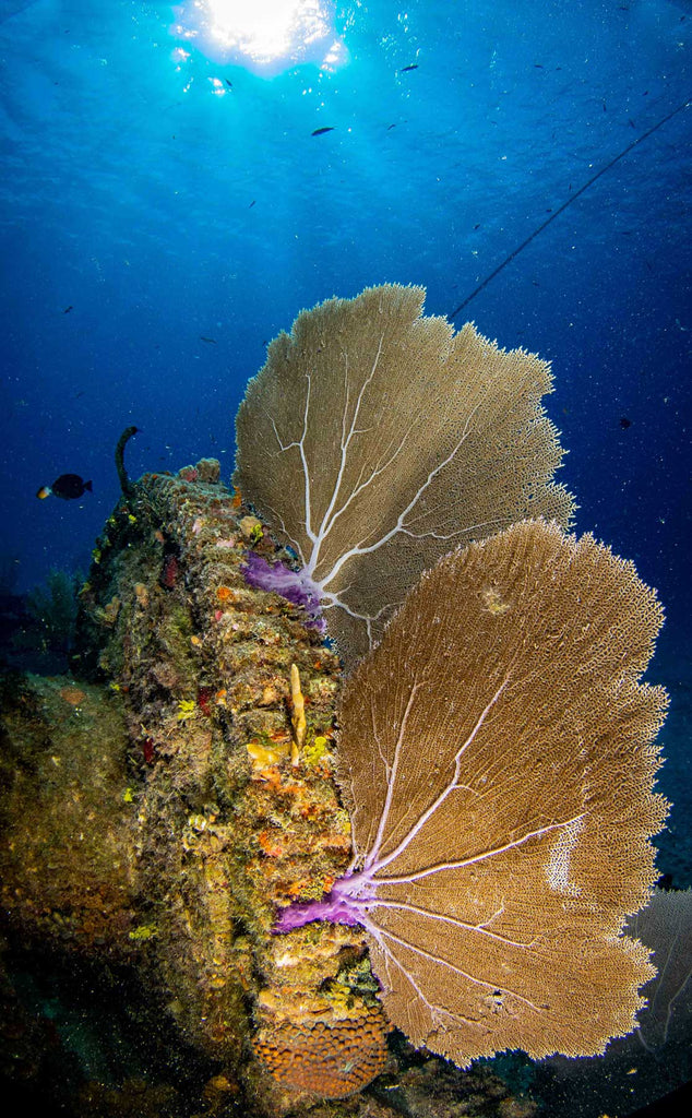 Canon Rebel SL3 Underwater Wide Angle by John Brigham