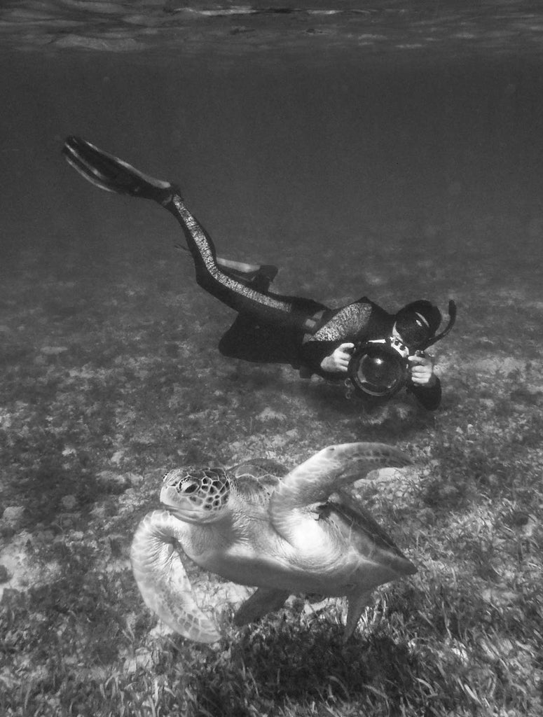 Snorkeler Photographing Turtle Grand Cayman Glenn Ostle Ikelite Housing