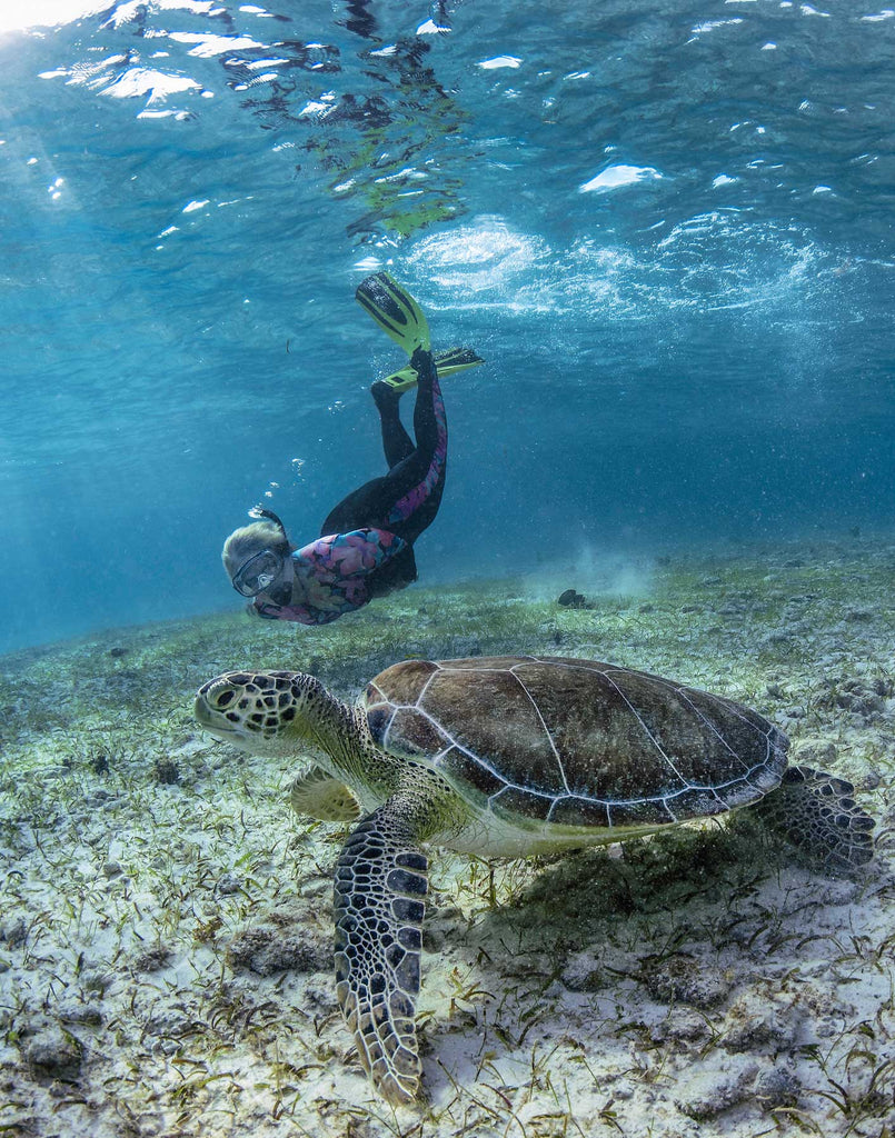 Turtle with Snorkeler Grand Cayman Glenn Ostle Ikelite Housing