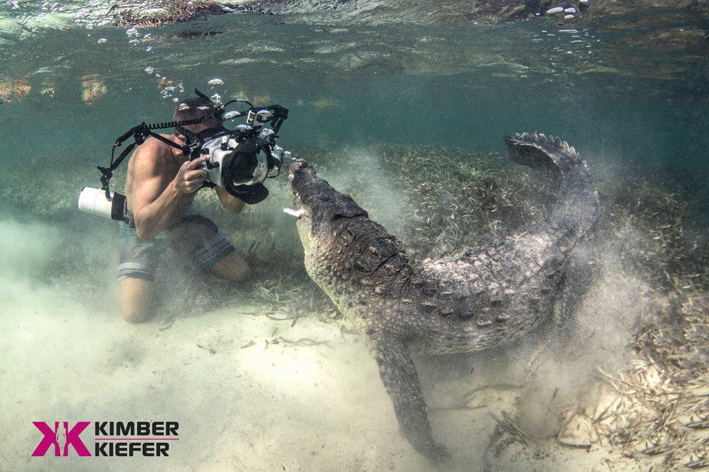 Crocodiles Underwater Photo by Ken Kiefer