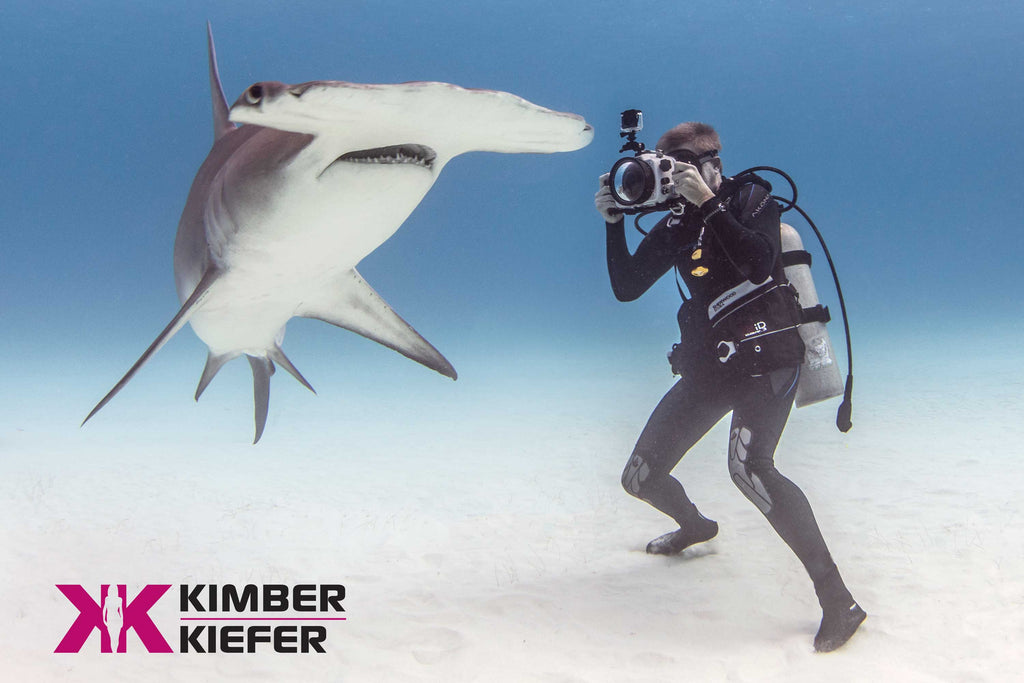 Shark Copyright Kimber Keifer