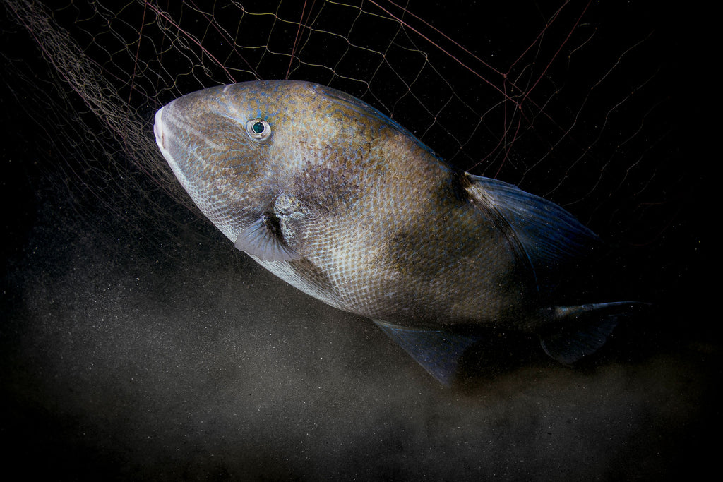 Fish in Net Lorenzo Terraneo Ikelite Housing