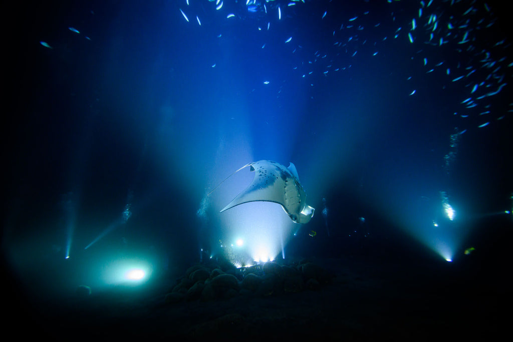 Manta Ray Night Dive Hawaii by Steve Miller with Ikelite Housing