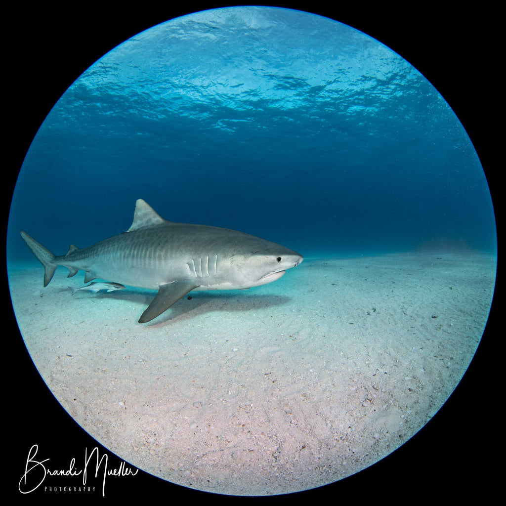 Nikon 8-15mm Underwater Photo by Brandi Mueller
