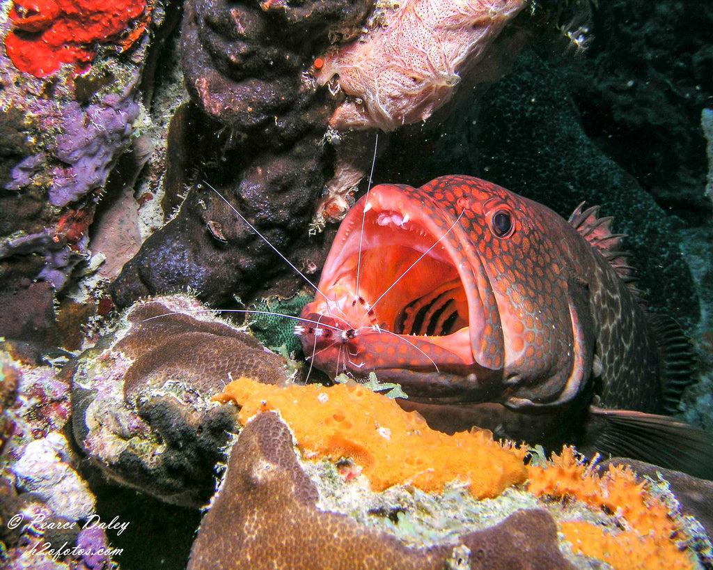 Pearce Daley Grouper and Shrimp