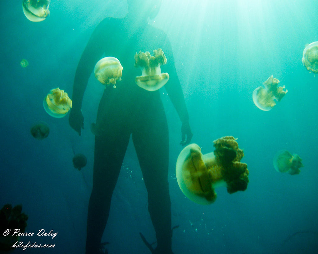 Pearce Daley Diver with Jellyfish