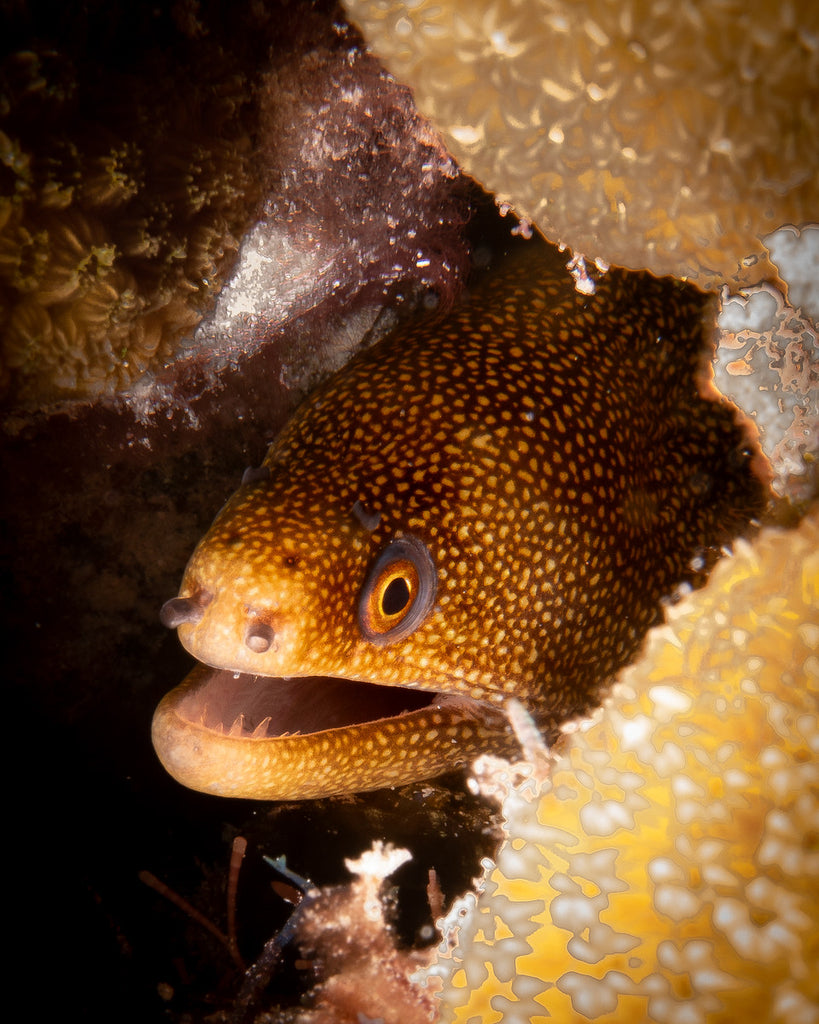 Sony RX100 VI Underwater Photo by John Brigham
