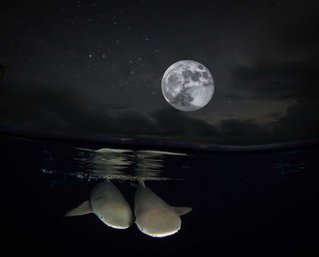 Shark Moon Composite by Steve Miller with Ikelite Housing