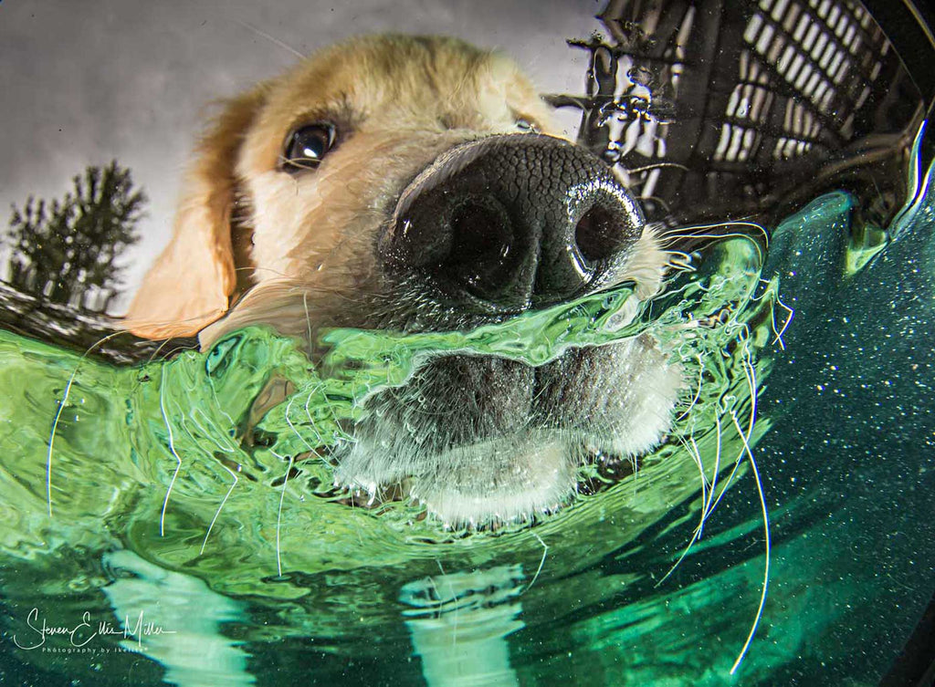 Underwater Dog by Steve Miller Ikelite Housing
