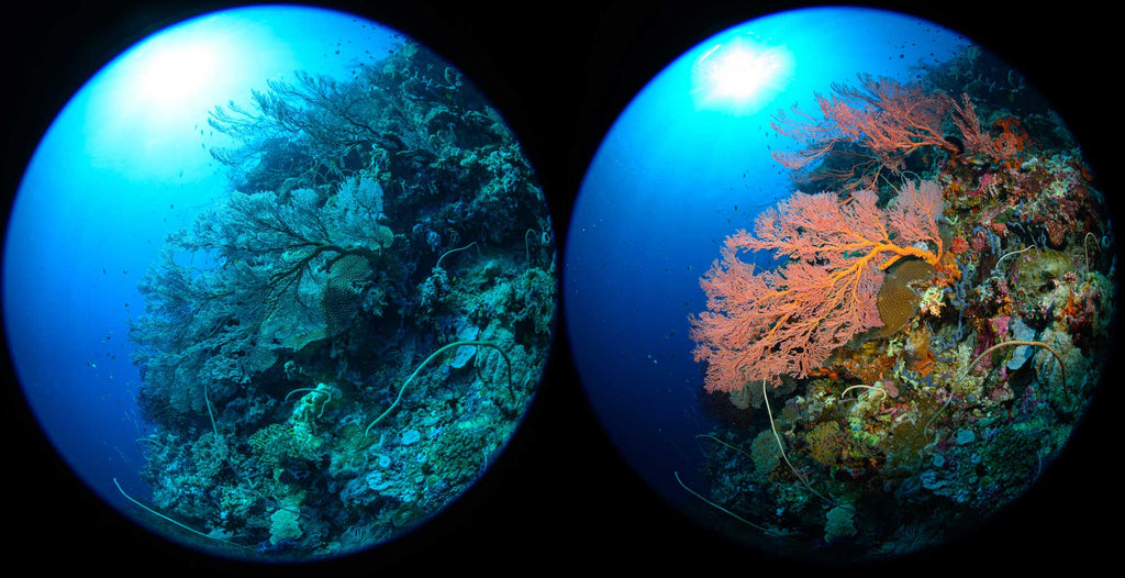 Photo comparison underwater with and without strobes