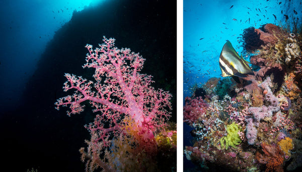 Examples of wide angle TTL underwater by Steve Miller