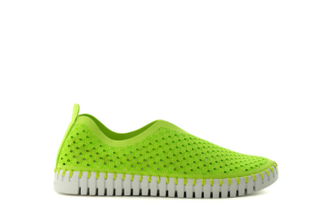 Tulip Flats - Lime