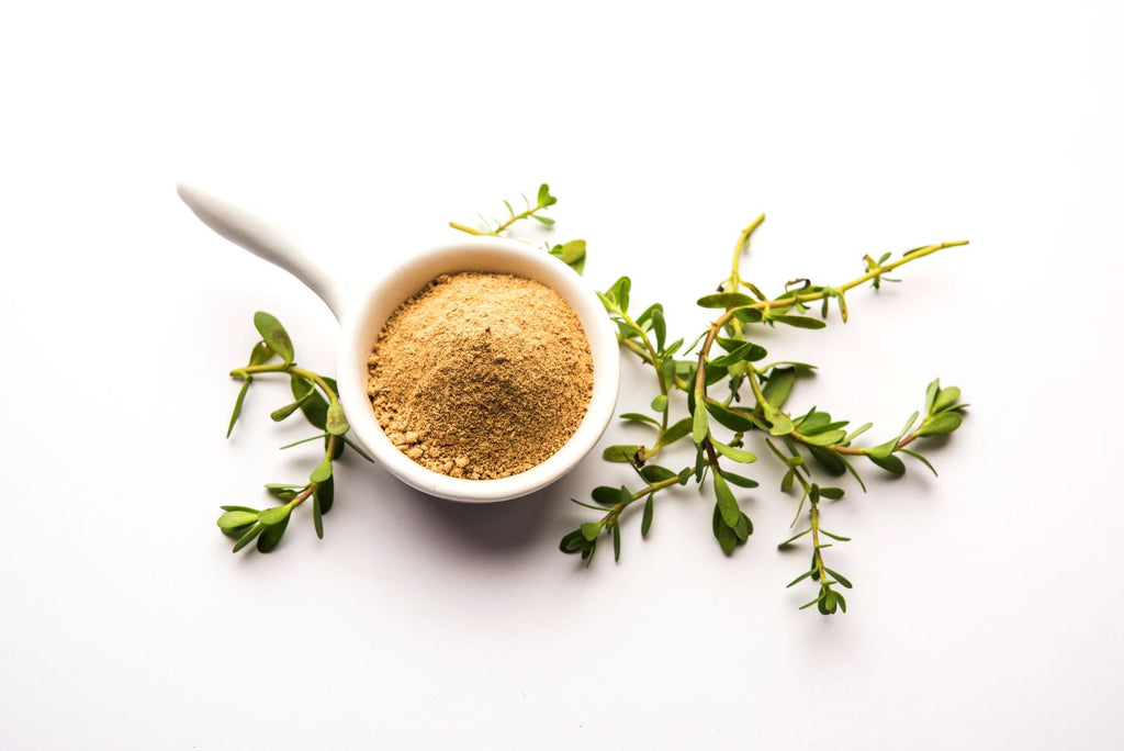 Best nootropics: Cup of ground Bacopa monnieri