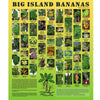 Poster - Bananas, by Ken Love