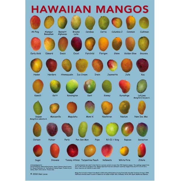 Poster - Mangos, by Ken Love