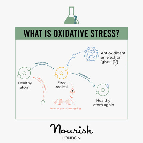 What is Oxidative Stress Infographics Explanation
