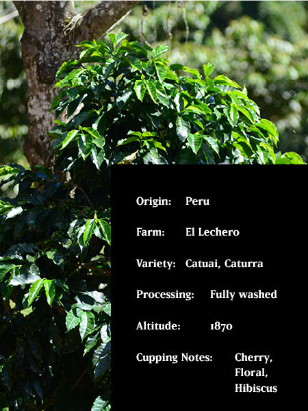 EL LECHERO, PERU, FULLY WASHED