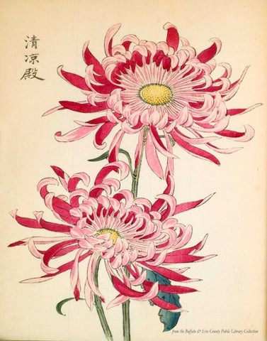 Beauty from Japan, 1893